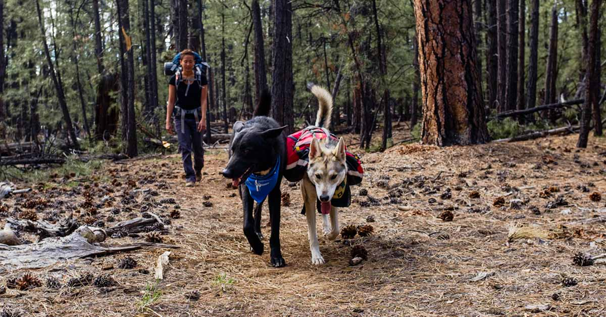 Dogs Hiking with the Mountainsmith K9 Dog Packs