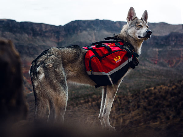 New K9 Ambassador, Lennon, stands on rock