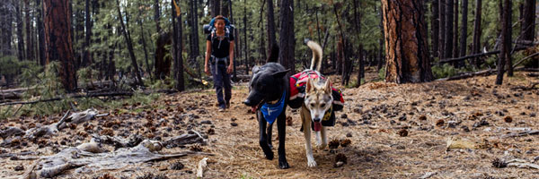 Lennon and Iro take the trail in Mountainsmith K9 Packs