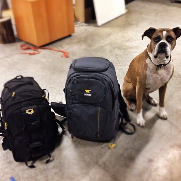 Arthur the boxer dog sits next to the old and new Mountainsmith Parallax camera bag