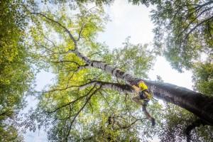 Dave Katz climbs trees in Racha Province