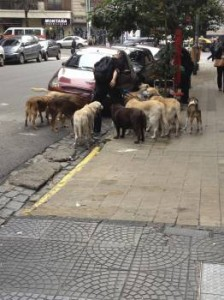 A professional dog walker in Villa Crespo