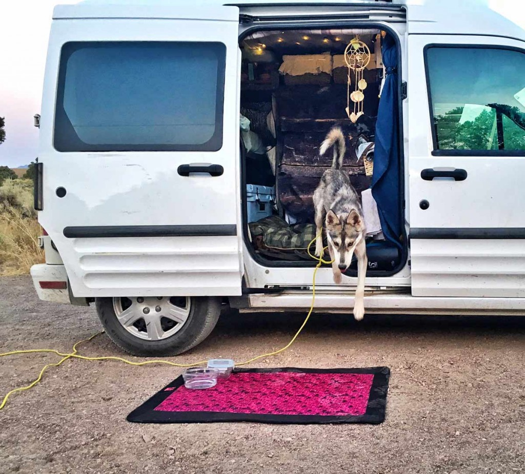 kuna the little wolf jumps out of the tiny van onto a pink doggie mat in the BLM land while camping